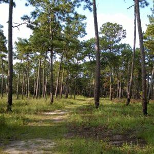 Alabama Landscapes: A Walking Tour of Longleaf Pine Forest @ Mobile Museum of Art